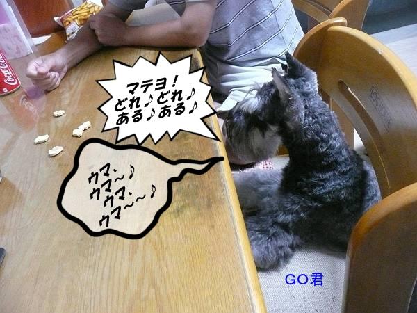 GO君8月4日-s