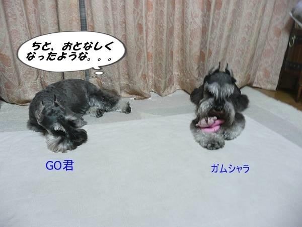 GO&ガムシャラ8月22日-s