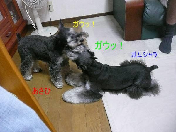 あさひ&ガムシャラ8月24日1-s