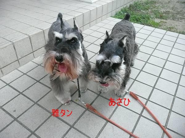 雅&あさひ9月5日-s