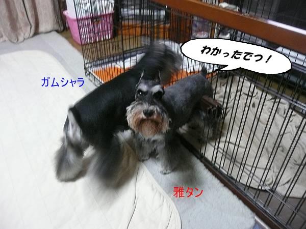 雅ガムシャラ9月9日-s