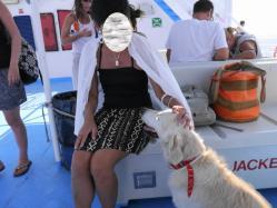 フェリーの犬(1)