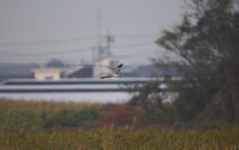 2013_11_17_11.jpg