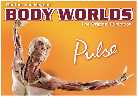 body world