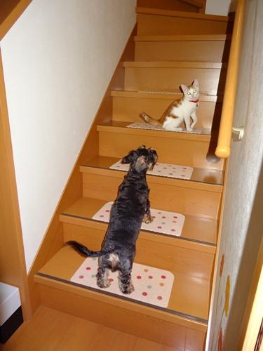 階段降りてきて