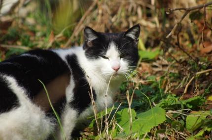 猫IMGP9214