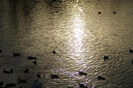 清水口調整池の夕日IMGP9778
