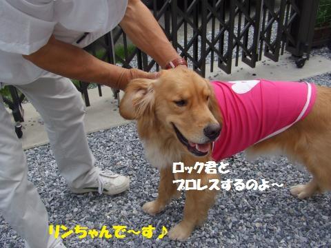 007_convert_20130715232458.jpg