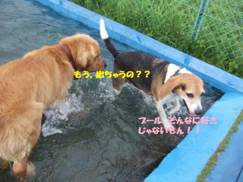 009_convert_20130730030052.jpg