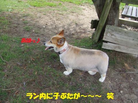 011_convert_20130703012503.jpg