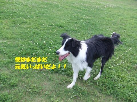 011_convert_20130710004056.jpg