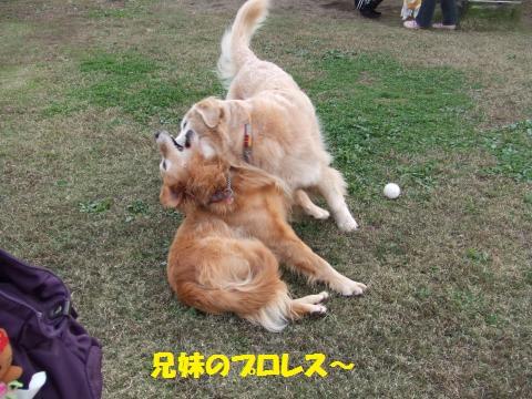 017_convert_20131124042126.jpg