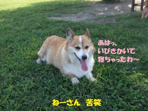 019_convert_20131014105850.jpg