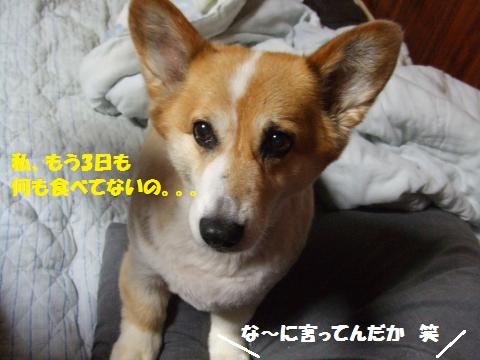 021_convert_20130713033011.jpg