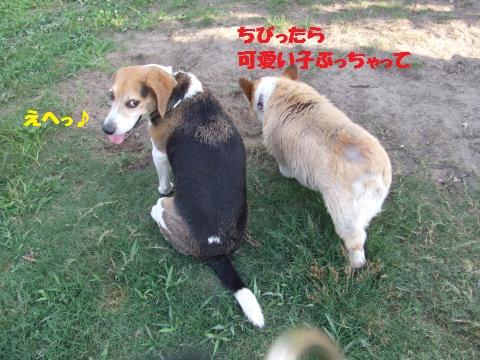 029_convert_20130811235131.jpg