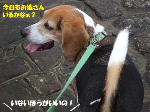 029_convert_20130916232612.jpg