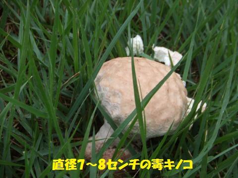 032_convert_20130916232744.jpg