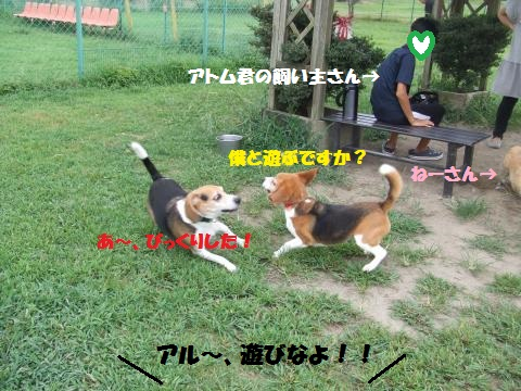 046_convert_20130905233837.jpg