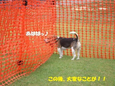 053_convert_20130826001505.jpg