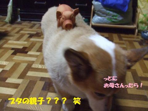 057_convert_20130806011247.jpg