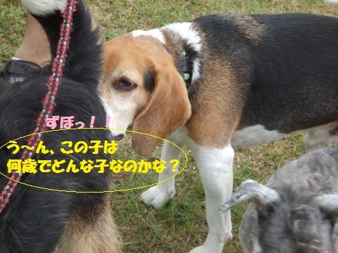 057_convert_20130826001416.jpg