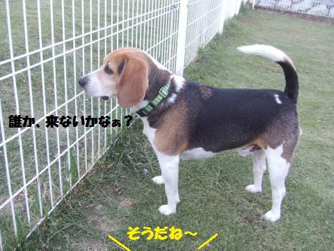 062_convert_20131112000801.jpg