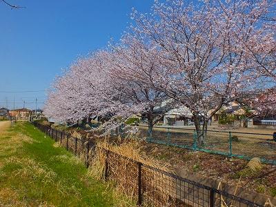 羽島用水散歩道