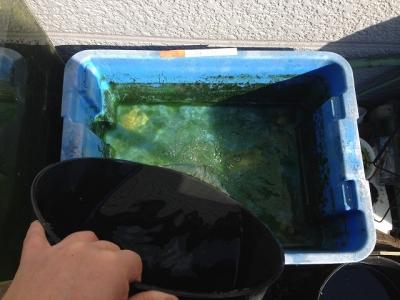 古い水投入