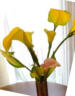 福島の花 黄色 240画
