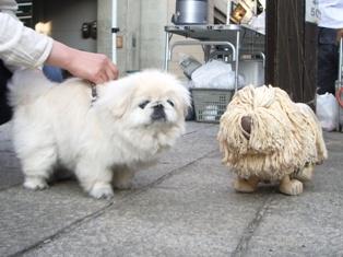 モップ犬3