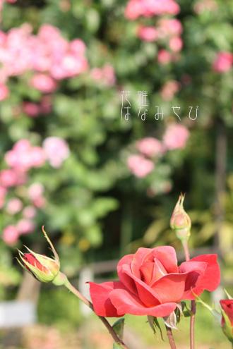 IMG_6084_edited-1のコピー