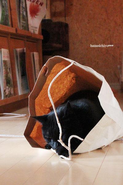 黒猫てんちゃ