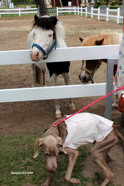 レイニーと馬