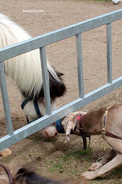 アッシュと馬