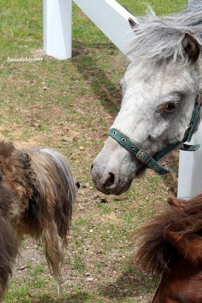 ブランと馬