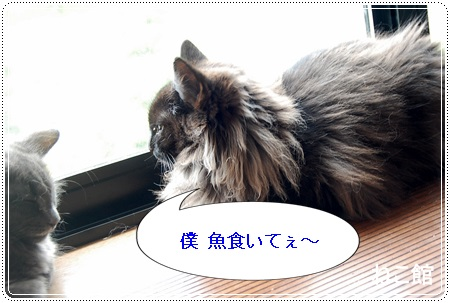 blog10_20130718220116.jpg
