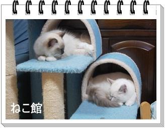 blog11_20130624103639.jpg