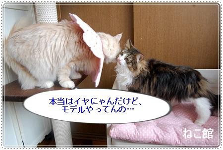 blog11_201311121154263bf.jpg