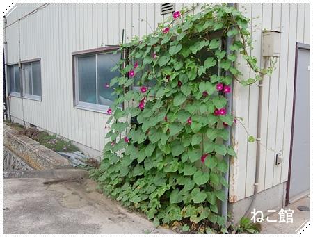 blog12_2013080422304247c.jpg