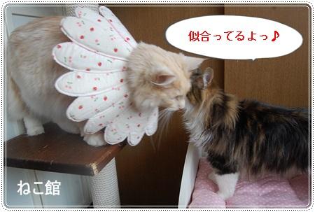 blog12_20131112115433148.jpg