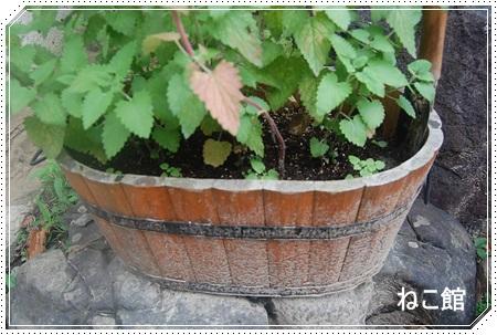 blog15_20130804223108837.jpg