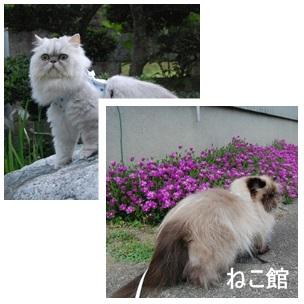 blog2_20130711125118.jpg