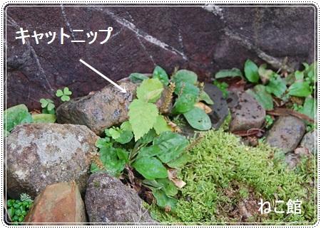 blog3_20130714152831.jpg