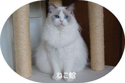 blog3_20130714155855.jpg