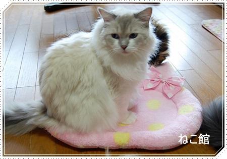 blog4_20131016125954efa.jpg