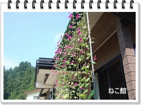 blog5_20130902233253f3e.jpg
