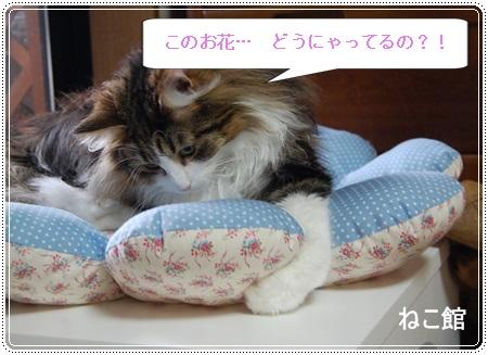 blog6_20130825225419a02.jpg