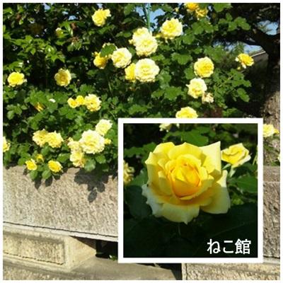 blog7_20130612112347.jpg