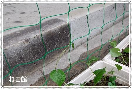 blog7_20130707173703.jpg
