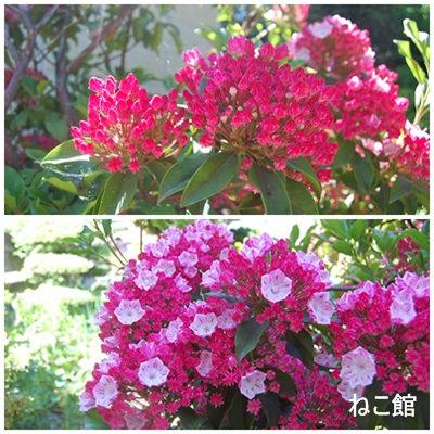 blog8_20130613115812.jpg